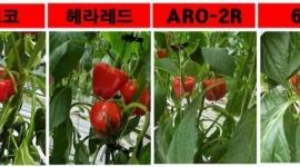 경남농기원, 국산 파프...